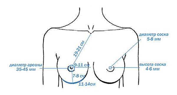 формы женской груди с фотографиями